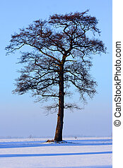 tree in the witer