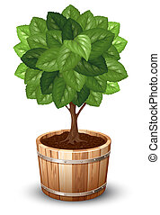 Tree in tub - Bonsai tree in wooden tub. Vector...
