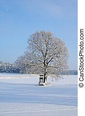 tree in winter 06