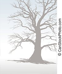 Tree In Winter Fog 1 - Silhouette of an old tree in the...