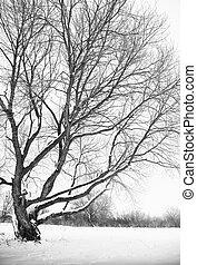 tree in winter season.