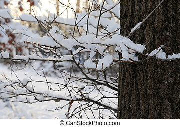 Tree in winter time, snow covered twigs