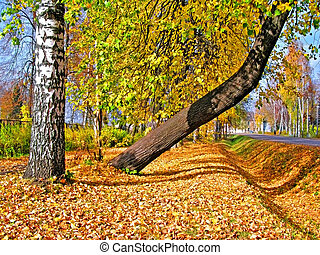 tree in yellow autumn park