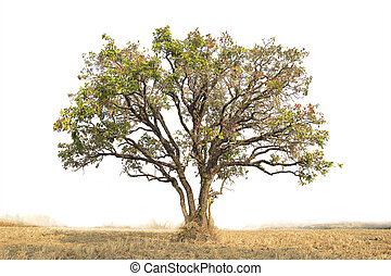 Tree isolated against a over white background