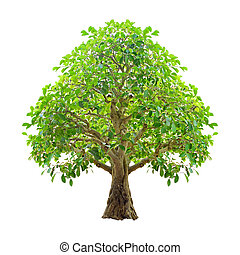 Tree isolated on a white background. Clipping paths included