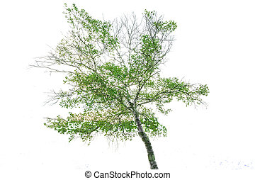 Tree Isolated on a white background with clipping path.