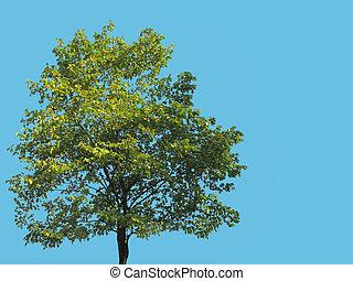 tree isolated on blue