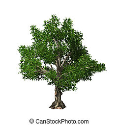 Tree isolated. Vector illustration