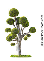 Tree isolated with white background