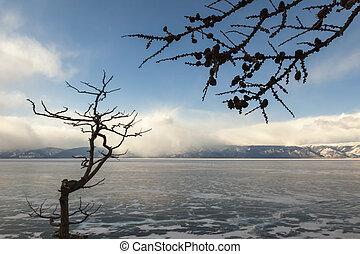 Tree, Lake Baikal, Olkhon Island.