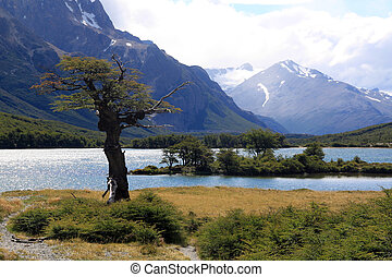 Tree, lake, mountain