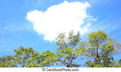 Tree landscape with cloud sky