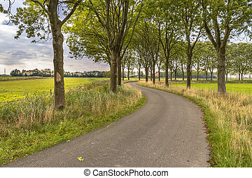 Tree lane along an old curved country road - Ash tree...
