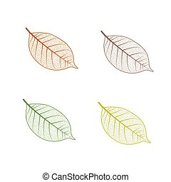 Tree leaf set. Autumn leaves isolated vector illustration on white background. Fall decoration clip art