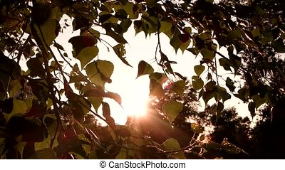 Tree leaves and sunlight. Nature during daytime. Calm place...