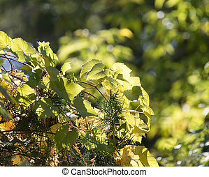 tree leaves in nature