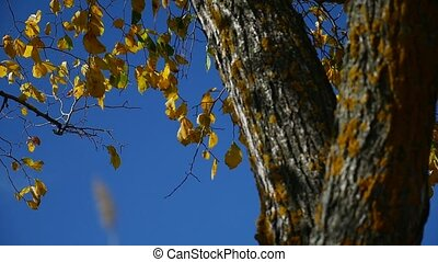 tree leaves in the wind branch of a against tree the sky nature autumn
