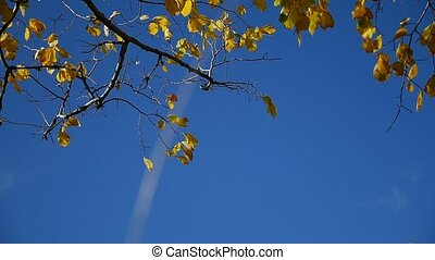 tree leaves in the wind branch of a tree against the sky nature autumn