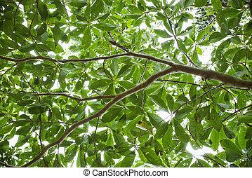 Tree leaves.