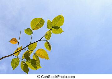 Tree leaves on blue sky background