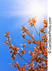 Tree leaves on blue sky