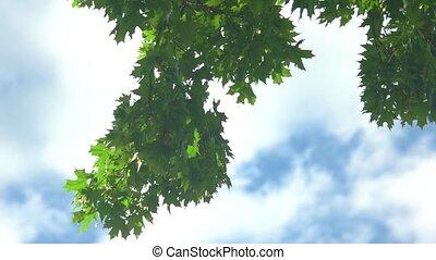 Tree leaves on sky background.