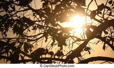 Tree Light Slider
