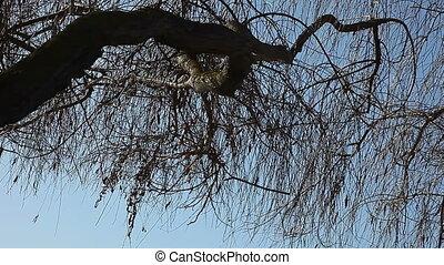 tree limb over lake - large tree limb with reflections of...
