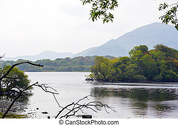 branches at the lakes in killarney