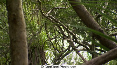 Tree Limbs In Forest - Steady, medium close up shot of tree...