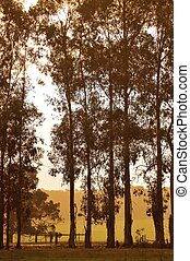 tree line in apricot light