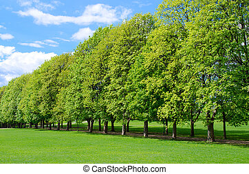Tree line in the popular Vigeland park in Oslo, Norway