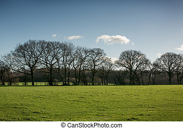 landscape image of a line of trees and grass