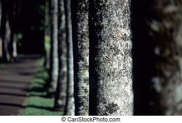 Line of trees in Botanical garden