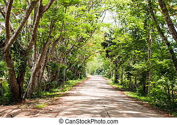 Tree line road