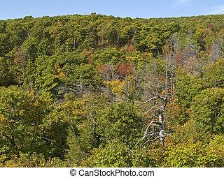 Tree-Line Shenandoah