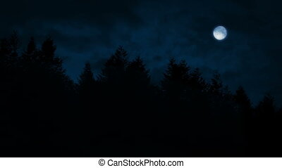 Tree Line With Moon Above - Tall forest trees with a full...