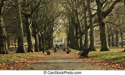 Tree-lined avenue in Green Park