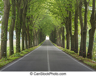 Tree lined country road in Tuscany, Italy