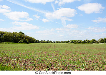 Tree-lined farm field with crops growing - Tree-lined farm...
