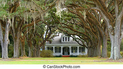 Tree lined lane leading to southern home in background - A...
