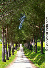 Tree lined path in summer