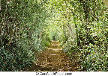 Tree lined path - Avenue of trees in the Britsh countryside