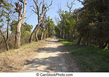tree lined road at harike wetlands india