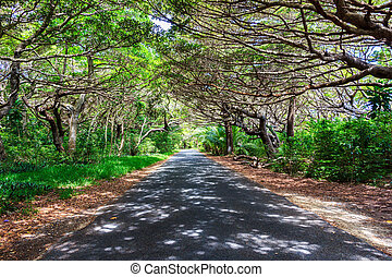Tree lined road in Iles des Pines, New Caledonia, SOuth Pacific
