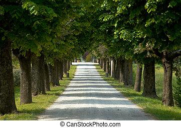 Tree lined gravel road in the Tuscany region of Italy.