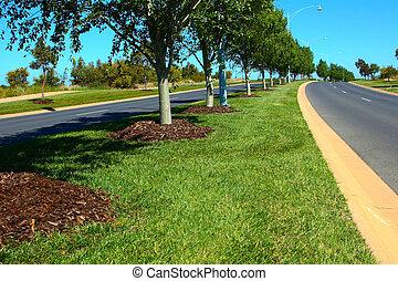 Tree Lined Road through empty blocks of land.