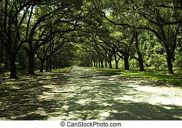 The tree lined boulevard of Winsloe Plantation in South Carolina