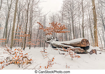 Tree log with snow in the forest