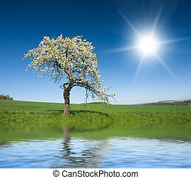 Tree - Lonely blooming apple tree in the green field with a ...